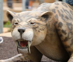 Saber-tooth tiger crouching